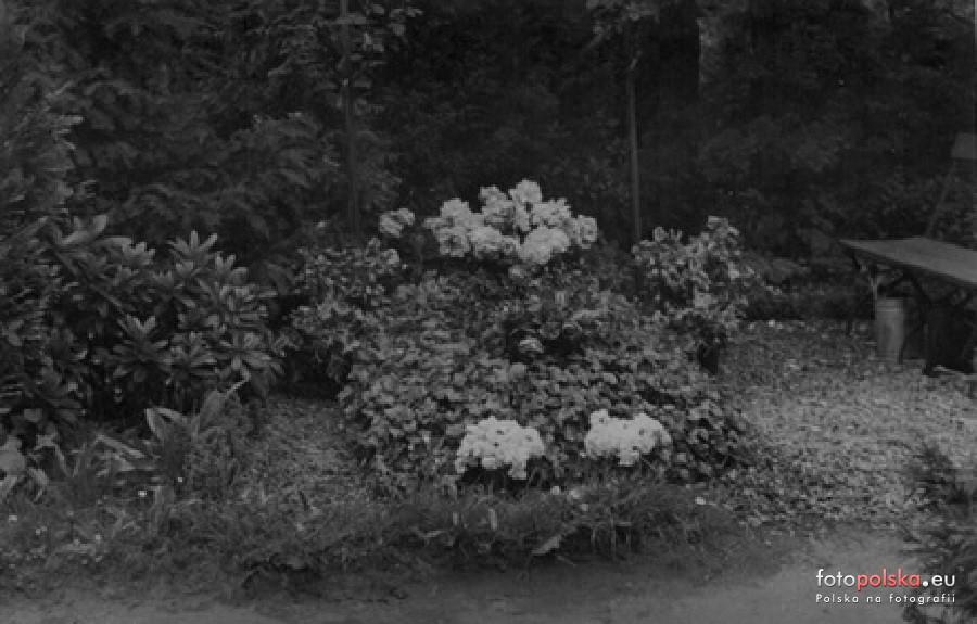 1935 , Grób opolskiego fotografa Maxa Glauera nanieistniejącej już części cmentarza przy ulicy Wrocławskiej. Zdjęcie pochodzi zezbiorów prawnuków fotografa. Fot.Fotopolska.eu.