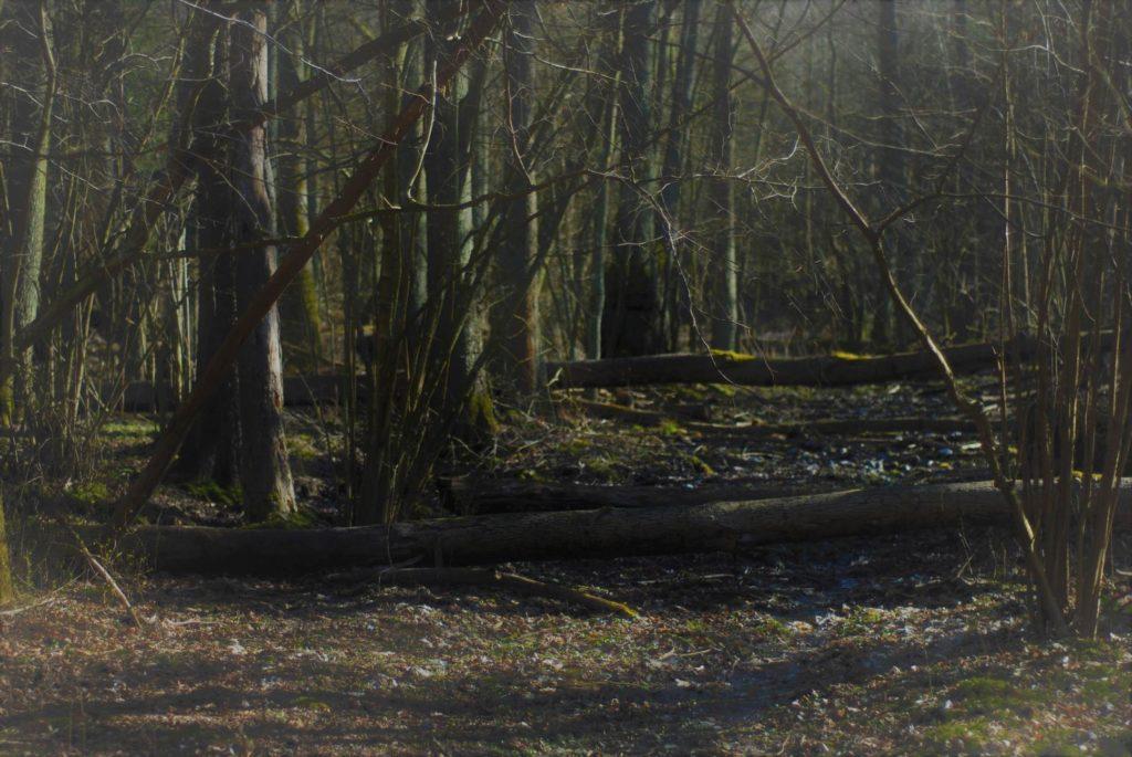 Z leśnej ścieżki niewiele pozostało. Pozarastana izatarasowana powalonymi drzewami czasami zupełnie zlewała się zlasem