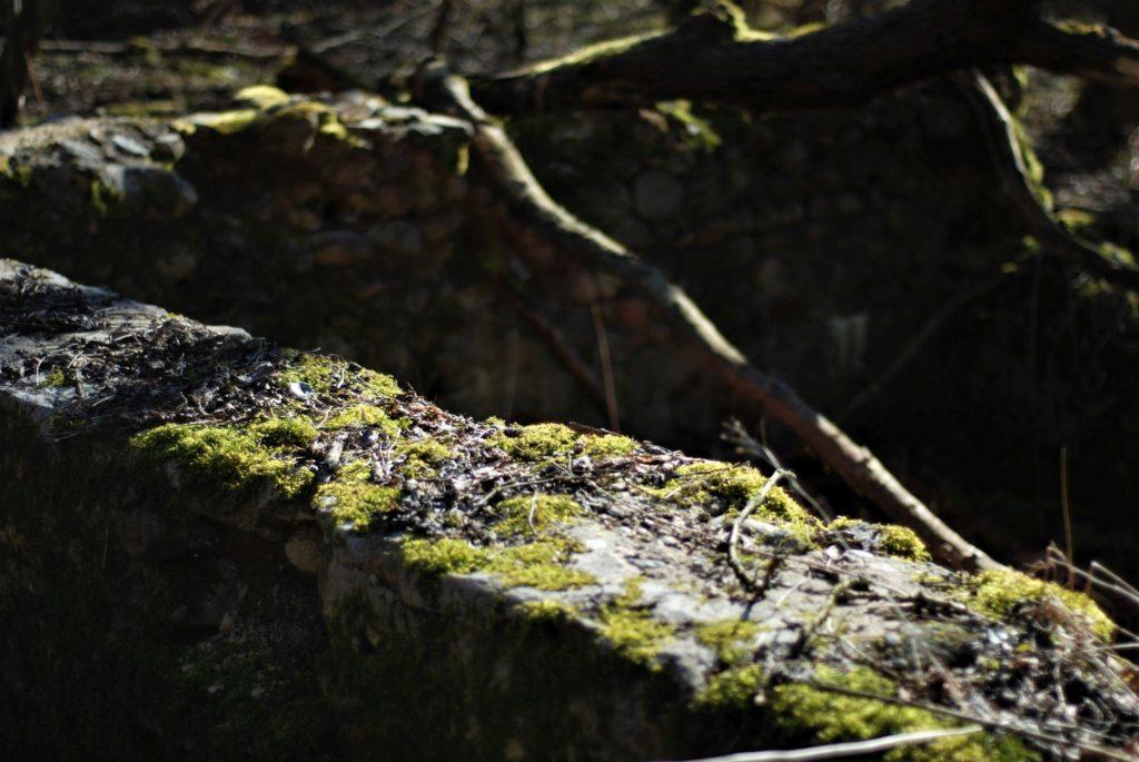 Ruiny starego młyna iosady