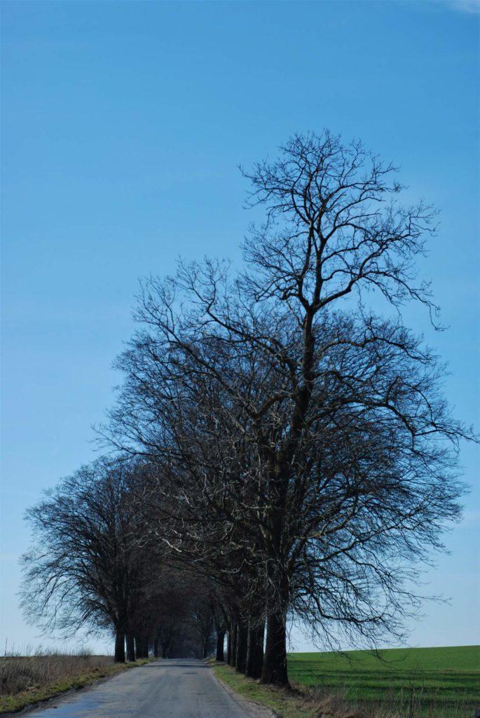 Tutaj jeszcze nikt niezdążył wyciąć drzew